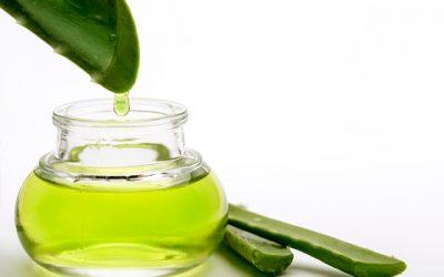 Astuces naturelles : les avantages d'utiliser l'Aloe vera